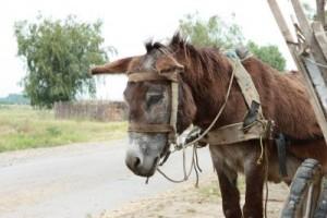 Please, won't someone eat this donkey?