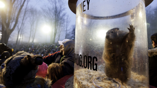 Punxsutawney Phil in his natural habitat: A cage, just after seeing his shadow predicting six more weeks of winter. February 2, 2014. (Photo by Jeff Swensen/Getty Images)