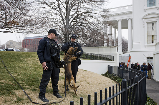 white_house_dog.jpg